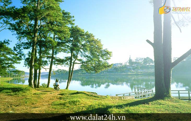 Những cây thông bên hồ Xuân Hương