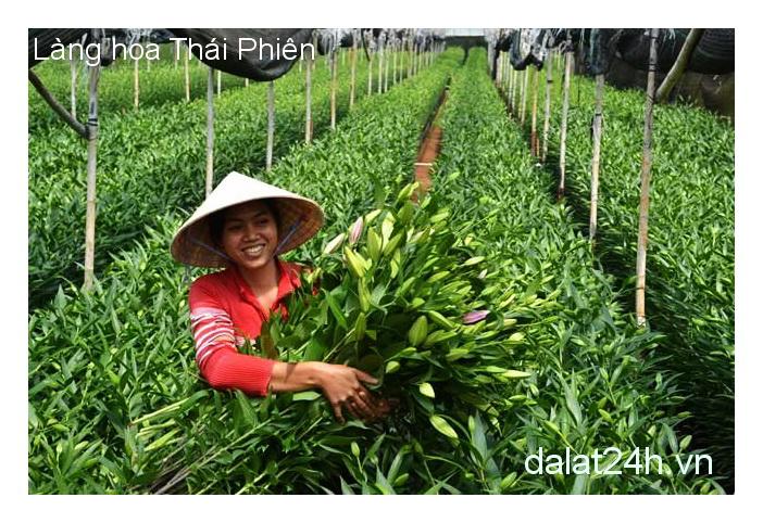 Du lịch Đà Lạt - làng hoa Thái Phiên Đà Lạt