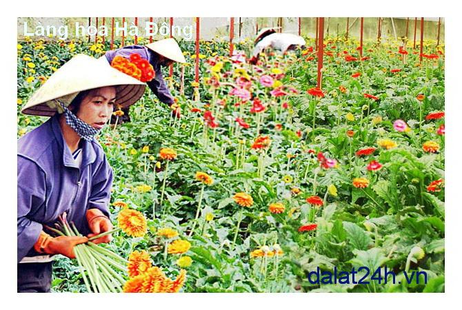 Làng hoa Hà Đông Đà Lạt 01