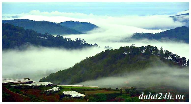 Rừng thông Đà Lạt ẩn hiện trong sương sớm