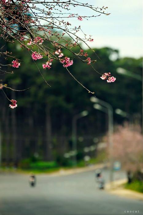 Du lịch Đà lạt mùa hoa 02